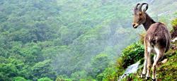 Sakleshpur - Coorg - Ooty - Munnar Travel Package
